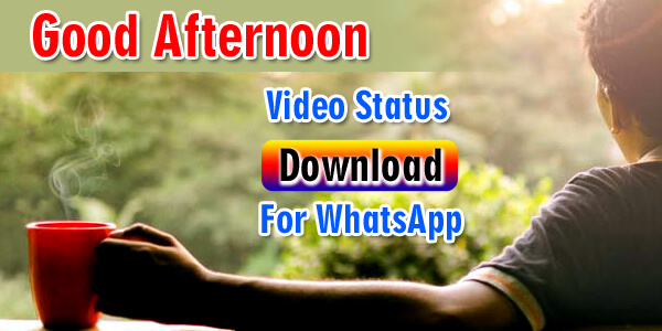 50 Good Afternoon Whatsapp Status Video Download Free Hd